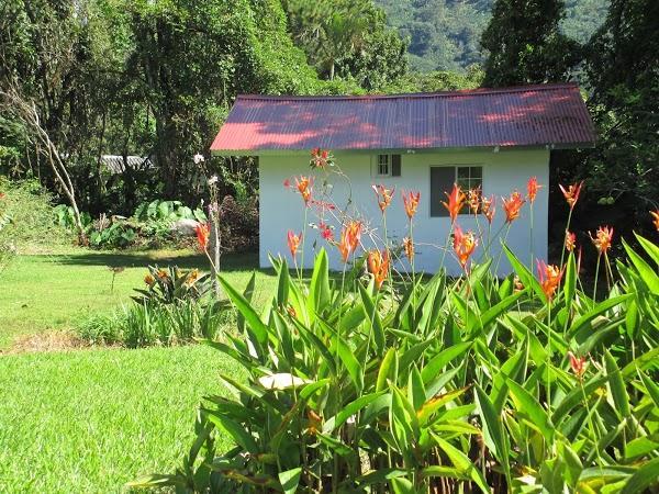 Imagen 5 Los Rosales foto