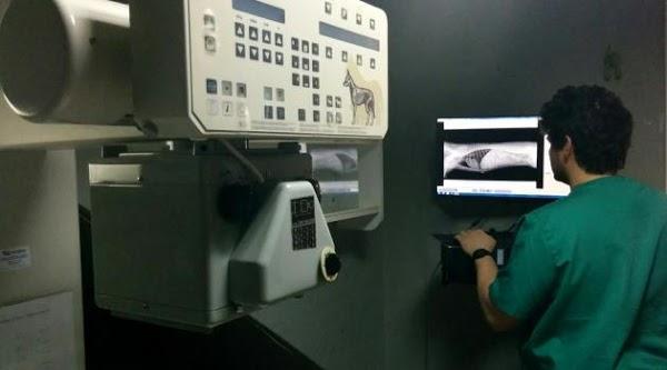 Imagen 37 Clinica Veterinaria Blasco Ibañez 119 foto