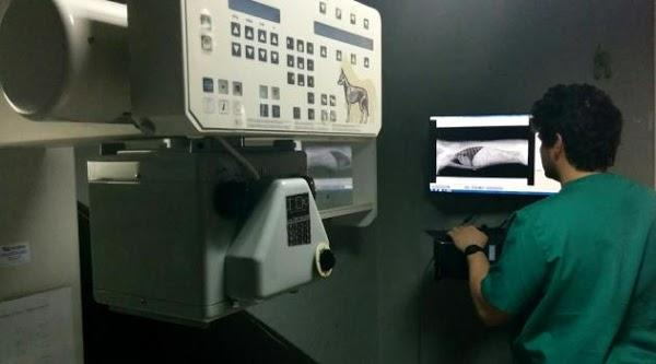Imagen 52 Clinica Veterinaria Blasco Ibañez 119 foto