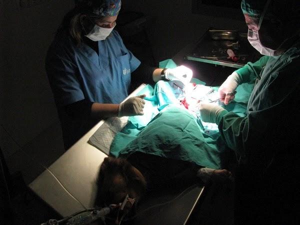 Imagen 49 Centro Clínico Veterinario foto