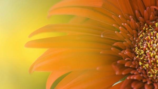 Imagen 7 Ariane Webdesign foto