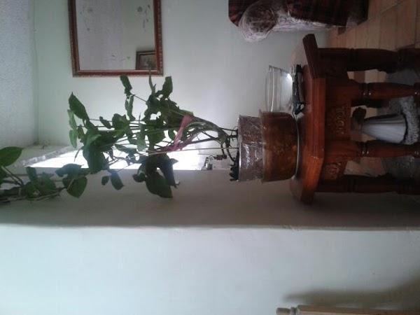 Imagen 12 castellers d'esparreguera foto