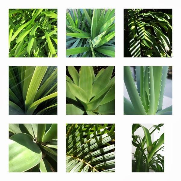 Imagen 9 Siempre Verde Diseño de Jardines foto